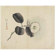 Yamada Ho_gyoku: (Camellia Flower and Bud) - ミネアポリス美術館
