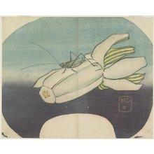 Yamada Ho_gyoku: (Cricket on a Squash) - ミネアポリス美術館