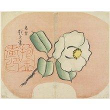 Yamada Ho_gyoku: (White Camellia) - ミネアポリス美術館