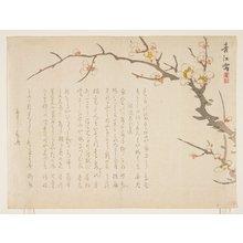 静湖: (Flowering plum) - ミネアポリス美術館