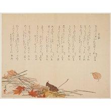 松村景文: Autumn Leaves and Pine Needles - ミネアポリス美術館