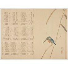松村景文: (Kingfisher on reed) - ミネアポリス美術館