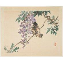幸野楳嶺: (Sparrow on a wisteria branch) - ミネアポリス美術館