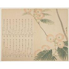 松村景文: Flowering Silk Tree - ミネアポリス美術館