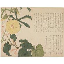 松村景文: (Yellow flowering shrub) - ミネアポリス美術館