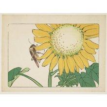 柴田是眞: (Grasshopper and sunflower) - ミネアポリス美術館