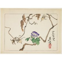 Shibata Zeshin: Vine and Seeds of Morning Glory - Minneapolis Institute of Arts