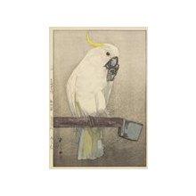 Yoshida Hiroshi: Sulphur-Crested Cockatoo - Minneapolis Institute of Arts