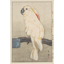 Yoshida Hiroshi: Salmon-Crested Cockatoo - Minneapolis Institute of Arts