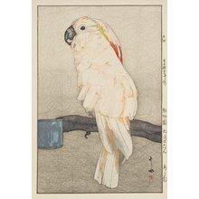 吉田博: Salmon-Crested Cockatoo - ミネアポリス美術館