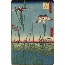 Utagawa Hiroshige: Iris Garden at Horikiri - Minneapolis Institute of Arts