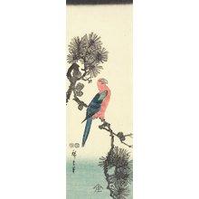歌川広重: (Parrot on Pine Tree) - ミネアポリス美術館