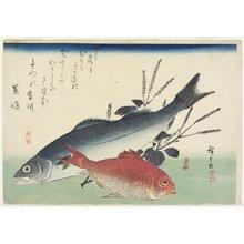 歌川広重: Red Snapper, Sea Bass and Perilla - ミネアポリス美術館