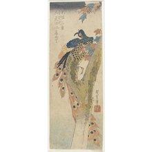 歌川広重: (Peacock on Maple Tree) - ミネアポリス美術館