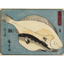 Utagawa Hiroshige: Globefish and Flounder - Minneapolis Institute of Arts