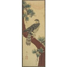 Utagawa Hiroshige: (Hawk on Pine Branch, Summer) - Minneapolis Institute of Arts