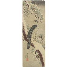 Utagawa Hiroshige: (Hawk on Pine Branch, Winter) - Minneapolis Institute of Arts
