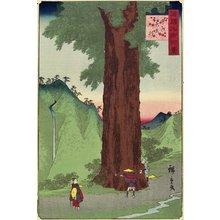 二歌川広重: Giant Ceder, Koshu Province - ミネアポリス美術館