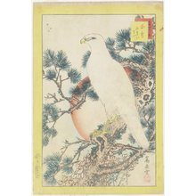 Nakayama Su_gakudo_: White Eagle on the Five-leaves Pine Tree - ミネアポリス美術館