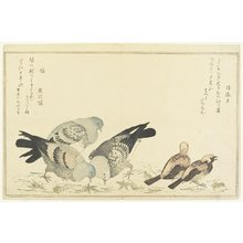 Kitagawa Utamaro: Tree Sparrow and Rock Dove - Minneapolis Institute of Arts
