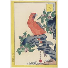 Nakayama Su_gakudo_: Pink Parrot on Rock - Minneapolis Institute of Arts