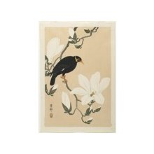 Shoson Ohara: Hill Myna on a Magnolia Branch - Minneapolis Institute of Arts