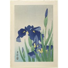 Shoson Ohara: Iris - Minneapolis Institute of Arts