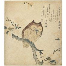 魚屋北渓: (Owl) - ミネアポリス美術館