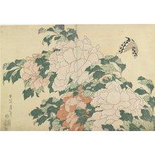 葛飾北斎: Peonies and Butterfly - ミネアポリス美術館