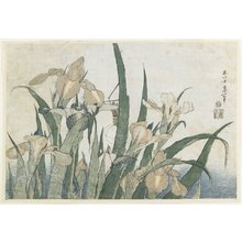 Katsushika Hokusai: Iris Flowers and Grasshopper - Minneapolis Institute of Arts