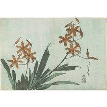 葛飾北斎: Blackberry Lilies - ミネアポリス美術館