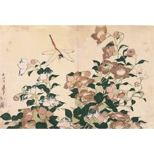 Katsushika Hokusai: Chinese Bellflowers and Dragonfly - Minneapolis Institute of Arts