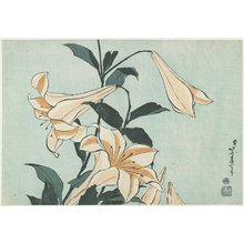 Katsushika Hokusai: Lilies - Minneapolis Institute of Arts