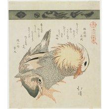 Totoya Hokkei: Mandarin Duck and Drake - Minneapolis Institute of Arts