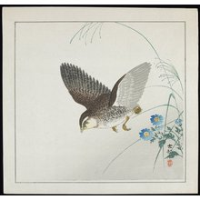 Shoson Ohara: Quail in Flight - Minneapolis Institute of Arts
