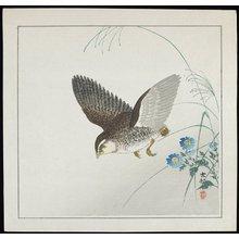 Shoson Ohara: Quail in Flight - ミネアポリス美術館