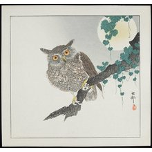Shoson Ohara: Owl - Minneapolis Institute of Arts