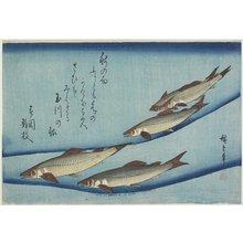 歌川広重: Sweetfish - ミネアポリス美術館