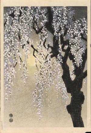 Kotozuka Eiichi: Drooping Cherry Blossoms - 垂れ桜 - Ohmi Gallery