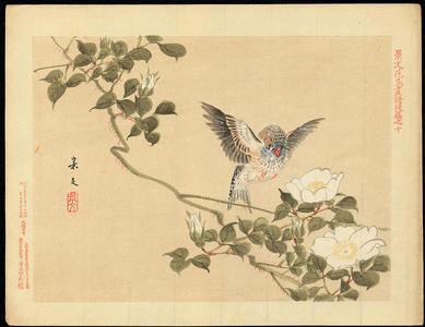 Keibun Matsumoto: Zebra Finch and Cherokee Rose - 七宝鳥 ハトヤバラ (1) - Ohmi Gallery