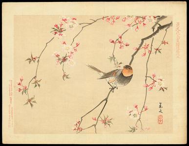 Keibun Matsumoto: Red Avadavat and Cherry - 紅更雀 (べにすずめ) 桜(さくら) - Ohmi Gallery