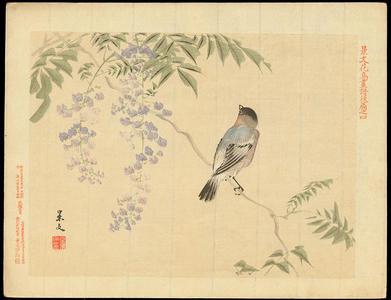Keibun Matsumoto: Eurasian Bullfinch and Purple Wisteria - 鷽(うそ) 紫藤(むらさきふじ) - Ohmi Gallery