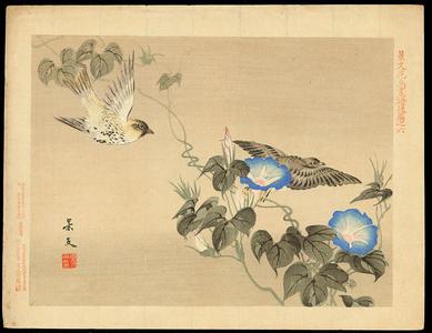 Keibun Matsumoto: Cardueline Finch and Morning Glory - 鶸 - Ohmi Gallery