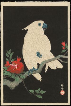 Shoson Ohara: Cockatoo and Pomegranate - Ohmi Gallery
