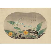 浅野竹二: Saururus Chinensis and Hypericum Patulum - Ohmi Gallery