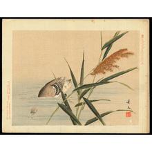 Keibun Matsumoto: Little Grebe and Reed - 鳰 葦 (1) - Ohmi Gallery