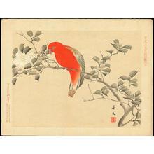 Keibun Matsumoto: Chattering Lorry and Camellia Sasanqua - 猩々鸚哥(しょうじょうインコ) 山茶花(さざんか) - Ohmi Gallery
