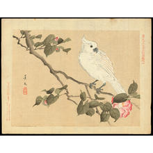 Keibun Matsumoto: Cockatoo and Camellia - 鸚鵡 椿 - Ohmi Gallery