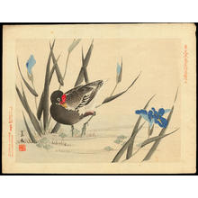 Keibun Matsumoto: Common Moorhen and Iris Ensata - バン 花菖蒲(はなしょうぶ) - Ohmi Gallery