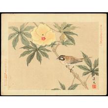 Keibun Matsumoto: Meadow Bunting and Hibiscus Esculentus - ホオジロ鳥 黄秋葵(オクラ) - Ohmi Gallery